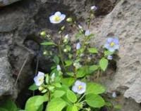 藻百年的花语是什么,感恩世界回馈大自然(且行且珍惜)