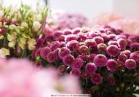 植物鲜花图片大全