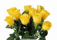 黄玫瑰花图片大全
