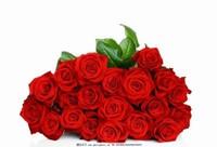 1121玫瑰花图片