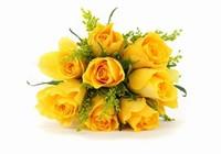 黄玫瑰花高清图片-素彩图片大全
