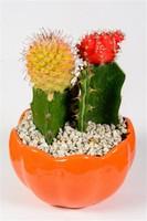 素材公社图片素材,鲜花植物花卉大全,仙人掌花卉盆栽图片