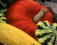 观赏南瓜常温下能保存多久,干燥可保存30天/南瓜干保存3年