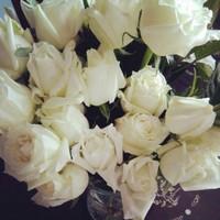 白玫瑰图片大全大图