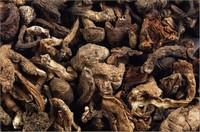 山蘑菇图片大全