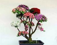 壁纸花盆景盆栽植物桌面1024