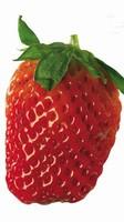 水果壁纸图片大全