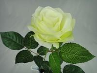钻石玫瑰花-h uang绿色
