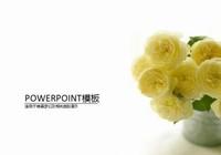 黄玫瑰图片唯美