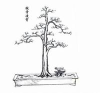 盆景造型图