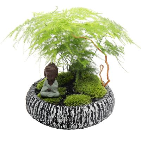 文竹盆景图