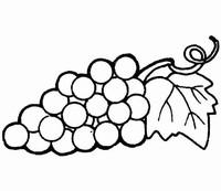 水果简笔画图片大全葡萄简笔画