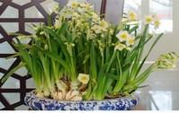 植物能起到很好的风水寓意,那么家里养什么花风水好呢