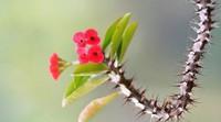 三大伤人种类花卉,提高警惕做好花卉伤人的防范
