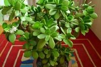 冬季最适合养的花卉植物,养护不当,容