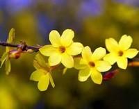 春天开的花有哪些 春天常见花朵的种类 花图片