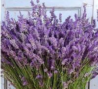 一切美好的东西都能让人心情愉悦,花卉也是之一