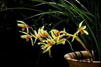 兰花怎么种植 兰花的种植和栽培的经验