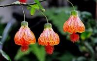四种奇特好看的花卉,居家装饰必备之物