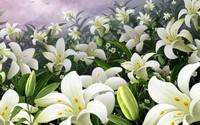 百合花怎么种植栽培?种植栽培前都需要做哪些准备?低调又对生活有非凡的品味追求的都喜欢百合花