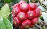 世界上竟然还有这些看起来奇幻的变态水果,你都知道吗?快来认识一下吧!
