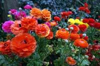 花卉叶片出现斑点怎么办?叶枯病防治