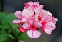 高颜值的开花植物,给你的家增添亮丽的触感