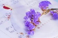 紫色勿忘我花语是什么,勿忘我名字来源