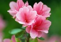 新手花友竟成了花草杀手 这10条养花技巧 第一次养花的你可以看看
