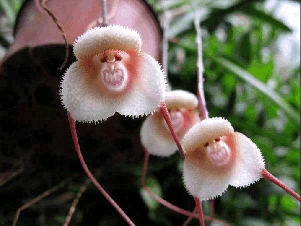 世界之大无奇不有,世界上最奇特的植物你见过几个?