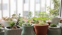 多肉种植方法与技巧,新手也能养出小花园