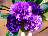十二紫色康乃馨的花语 紫色康乃馨:温暖而亲切