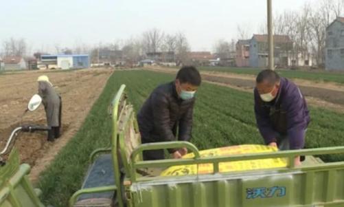 菏泽巨野合作社统一采购后平价卖给种植户,而且给送到芦笋地头上