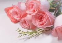 粉红色玫瑰的花语 不同朵数粉色玫瑰花的花语