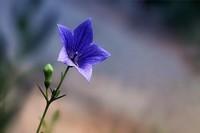 情人节送花花语 送花之前,先搞清楚花语是什么,送错就不好啦