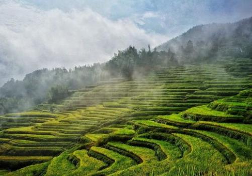 带你深入了解新型农业经营主体政策扶持背后的绝佳发展机遇