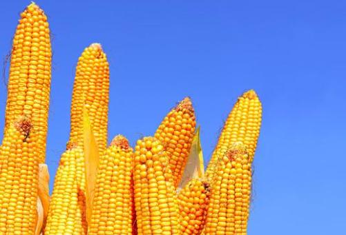2020中国粮食进口将破亿吨——大豆有所增加,玉米继续受限