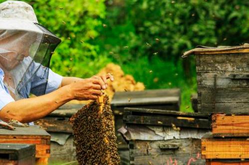 农家蜂蜜为什么更受欢迎 超市蜂蜜差在哪?
