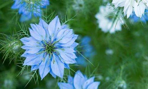 列出的十朵花可以快速发芽,生长和盛开