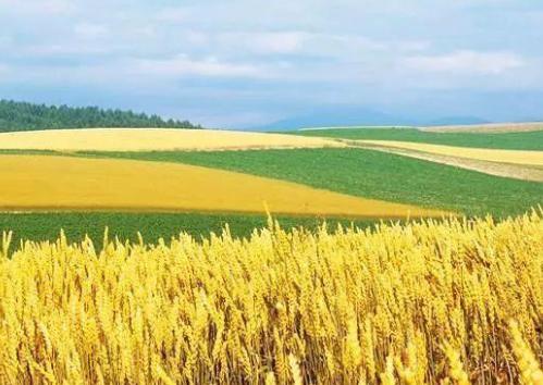 粮食进口超一亿吨,土豆大豆缺口大,农民为什么有的还抛荒?