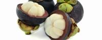 山竹果树种植技术