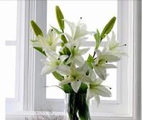 白百合花的图片