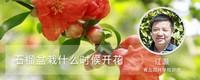 石榴盆栽什么时候开花