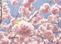 百合花语经典语录收集,关于百合花的优美语句