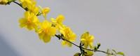 春天里开什么花