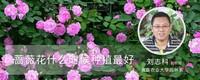蔷薇花什么时候种植最好
