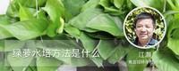 绿萝水培方法是什么