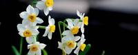 卧室摆什么植物招财,有什么摆放风水禁忌?