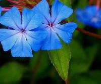 温室花卉养护如何施肥