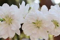 世界上十大花语最悲伤的花